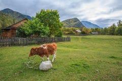 Kalv i en bergby Arkivbild