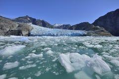 Kalva glaciären Alaska Arkivfoton