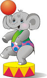kalvcirkuselefant Arkivbilder