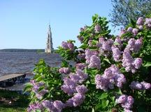 Kalyazin Russland Der Glockenturm der Kathedrale von Sankt Nikolaus und von blühenden Fliedern Lizenzfreie Stockfotos