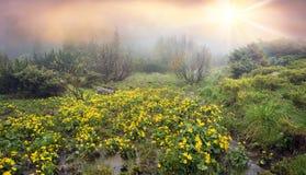 Kalyuzhnitsa in the forest Stock Photography