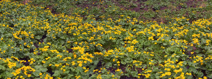Kalyuzhnitsa in the forest Stock Images