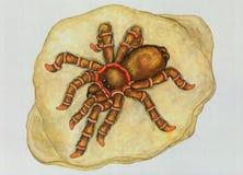 Kam entlang eine Spinne Lizenzfreies Stockfoto