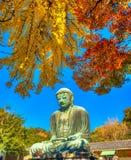 Kamakura Buddha, japan. Royalty Free Stock Photo