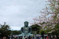 Kamakura Daibutsu avec SAKURA Images stock