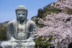 Kamakura Daibutsu con i fiori di ciliegia Fotografia Stock Libera da Diritti