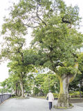 Kamakura główna ulica Obraz Royalty Free