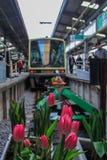 2013 01 06, Kamakura, Japan Vorderansicht des Zugs und der Tulpen an der Eisenbahn stockfotografie