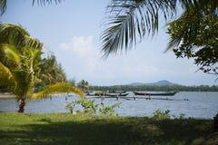 Kambodża dżungla Zdjęcie Royalty Free