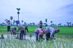 Kambodża wsi życie Fotografia Stock