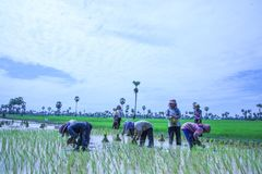 Kambodża wsi życie Zdjęcie Stock