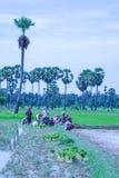 Kambodża wsi życie Obraz Royalty Free