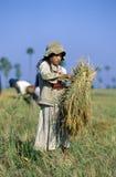 Kambodża Zdjęcie Stock