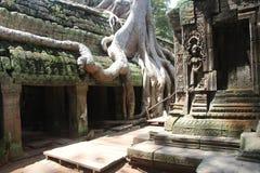 kambodja De tempel van Ta Prohm Siem oogst Provincie Siem oogst stad Royalty-vrije Stock Foto's