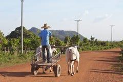 kambodjansk oxcart Arkivbild