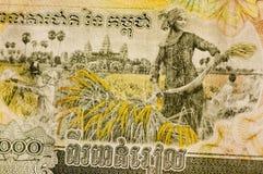 Kambodscha-Banknote-Reis-Ernten Stockfotografie