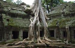 Kambodschanischer Tempel von Ta Prohm Stockbilder