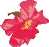 Kamboja kwiat Zdjęcia Stock