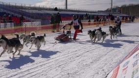 Kamchatka Żartuje rywalizacji sania Psi Ścigać się Dyulin Beringia zbiory wideo