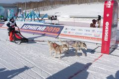 Kamchatka έλκηθρο σκυλιών ανταγωνισμών παιδιών που συναγωνίζεται Dyulin Beringiya στοκ φωτογραφίες με δικαίωμα ελεύθερης χρήσης