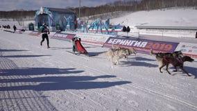 Kamchatka αγώνας Dyulin Beringia σκυλιών ελκήθρων ανταγωνισμών παιδιών απόθεμα βίντεο