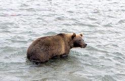 Kamchatka brunbjörn, medan fiska Royaltyfri Fotografi
