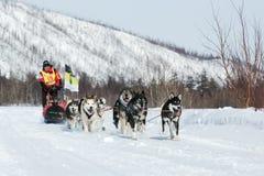 Kamchatka extreme Dog Sled Racing Beringia. Russia, Far East Stock Image