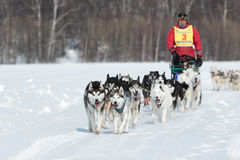 Kamchatka extreme Sled Dog Racing Beringia. Russian Far East Stock Photos