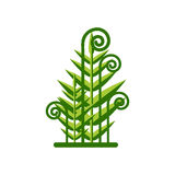 Kamchatka Fern Isolated on white background. Green Plant icon. Kamchatka Fern Isolated on white background. Green Plant icon Royalty Free Stock Images