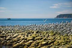 Kamchatka island of birds. Kamchatka, Russia, island of birds in ocean near city Petropavlovsk-kamchatsky, shot in 2007 year stock images