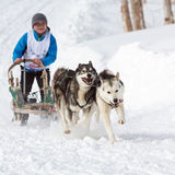 Kamchatka Kids Dog Sledge Race Royalty Free Stock Image