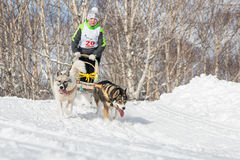 Kamchatka Kids Dog Sledge Racing Royalty Free Stock Photography