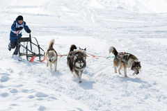 Kamchatka Kids Sled Dog Race Dulin, Beringia Royalty Free Stock Photography