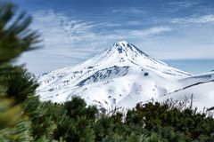 Snowy cone of volcano and thickets of evergreen Pinus Pumila bushes. Kamchatka Peninsula volcanic landscape: beautiful snowy cone of Vilyuchinsky Volcano and Royalty Free Stock Photo