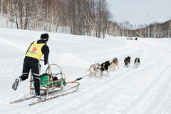 Kamchatka Sled Dog Race Beringia Stock Photos