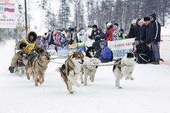 Kamchatka Sled Dog Racing. Russia, Far East Royalty Free Stock Image