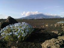 kamchatka Volcanes agudos y Tolbachik plano Imagen de archivo libre de regalías