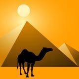 Kameel & Piramides Vector Illustratie