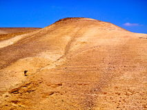Kameel in de woestijn royalty-vrije stock foto