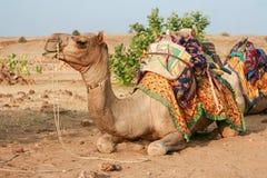 Kameel in de woestijn. Het wachten op cameleer. Jaisalmer, Rajasthan, Royalty-vrije Stock Afbeeldingen