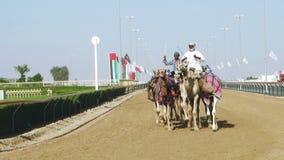 Kameel die in Doubai rennen stock videobeelden