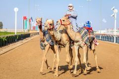 Kameel die in Doubai rennen Stock Foto's