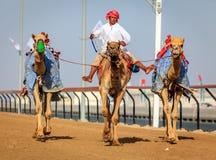 Kameel die in Doubai rennen Royalty-vrije Stock Fotografie