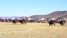 Kameel die in Gouden Eagle Festival rennen stock video