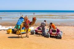 Kameel die zich op het strand van Rode Overzees in Egypte bevinden Royalty-vrije Stock Foto's