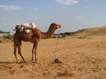 Kameel die zich op het zand in de woestijn bevinden royalty-vrije stock fotografie