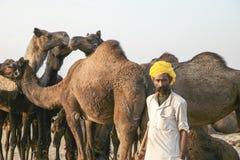Kameel Eerlijke Pushkar 2015 royalty-vrije stock afbeelding