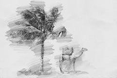 Kameel en palm Schets met potlood Royalty-vrije Stock Afbeeldingen