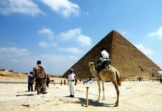 Kameel en piramide Royalty-vrije Stock Fotografie
