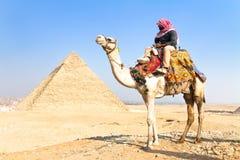 Kameel in Giza pyramides, Kaïro, Egypte. Stock Foto
